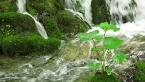 Καταρράκτης στο εθνικό πάρκο Plitvice φιλμ μικρού μήκους
