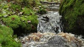 Καταρράκτης στο πράσινο τροπικό δάσος απόθεμα βίντεο