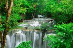 Καταρράκτης στο φρέσκο πράσινο δάσος στοκ εικόνες
