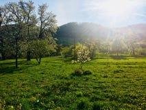 Καταρρίψεις της εγχώριας Σλοβακίας άνοιξη φύσης στοκ εικόνες