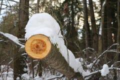 Καταρριφθείσα ξυλεία στο δάσος Στοκ εικόνες με δικαίωμα ελεύθερης χρήσης