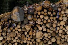 Καταρριφθε'ντα δέντρα Στοκ εικόνες με δικαίωμα ελεύθερης χρήσης
