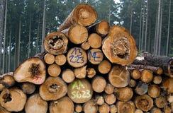 Καταρριφθε'ντα δέντρα Στοκ φωτογραφία με δικαίωμα ελεύθερης χρήσης