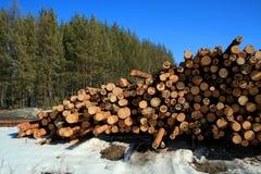 Καταρριφθε'ντα αποθήκη εμπορευμάτων δέντρα πεύκων και δάσος πεύκων στο υπόβαθρο στοκ εικόνα με δικαίωμα ελεύθερης χρήσης