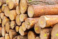 Καταρριφθε'ντα δέντρα Στοκ φωτογραφίες με δικαίωμα ελεύθερης χρήσης