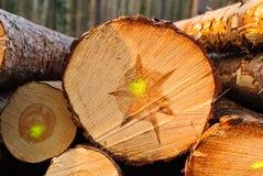 Καταρριφθε'ντα δέντρα Στοκ Εικόνες