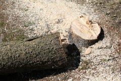 Καταρριφθε'ν δέντρο Στοκ Φωτογραφίες