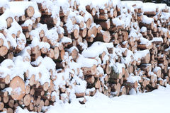 Καταρριφθε'ν ξύλο κάτω από το χιόνι Στοκ εικόνες με δικαίωμα ελεύθερης χρήσης