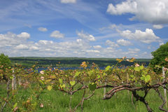 κατασκευή του κρασιού &al Στοκ φωτογραφίες με δικαίωμα ελεύθερης χρήσης