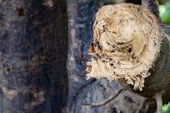 Καταστρέψτε τη ζούγκλα, κούτσουρα που εξάγονται από ένα βιώσιμο δάσος κάτω από το s στοκ εικόνα