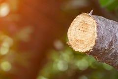Καταστρέψτε τη ζούγκλα, κούτσουρα που εξάγονται από ένα βιώσιμο δάσος κάτω από το s στοκ φωτογραφία