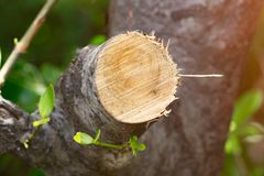 Καταστρέψτε τη ζούγκλα, κούτσουρα που εξάγονται από ένα βιώσιμο δάσος κάτω από το s στοκ φωτογραφία με δικαίωμα ελεύθερης χρήσης
