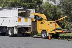 Καταστροφέας εγγράφων κλάδων δέντρων στην εργασία στοκ φωτογραφία με δικαίωμα ελεύθερης χρήσης
