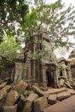 Καταστροφές του TA Prohm, Καμπότζη Στοκ Εικόνες