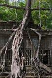 Καταστροφές Beng Mealea, Angkor, Καμπότζη Στοκ Φωτογραφία