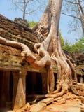 Καταστροφές TA prohm, Angkor Wat, Καμπότζη Στοκ εικόνες με δικαίωμα ελεύθερης χρήσης