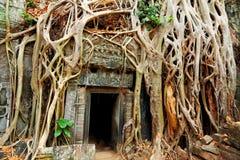 Καταστροφές TA prohm, Angkor Wat, Καμπότζη Στοκ εικόνα με δικαίωμα ελεύθερης χρήσης