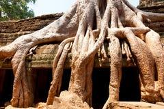 Καταστροφές TA prohm, Angkor Wat, Καμπότζη Στοκ φωτογραφία με δικαίωμα ελεύθερης χρήσης