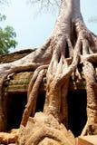 Καταστροφές TA prohm, Angkor Wat, Καμπότζη Στοκ φωτογραφίες με δικαίωμα ελεύθερης χρήσης