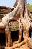 Καταστροφές TA prohm, Angkor Wat, Καμπότζη Στοκ Φωτογραφία