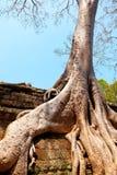 Καταστροφές TA prohm, Angkor Wat, Καμπότζη Στοκ Εικόνες