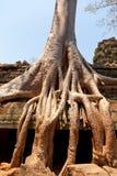 Καταστροφές TA prohm, Angkor Wat, Καμπότζη Στοκ Φωτογραφίες