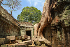 Καταστροφές Wat Angkor στη ζούγκλα Στοκ φωτογραφία με δικαίωμα ελεύθερης χρήσης