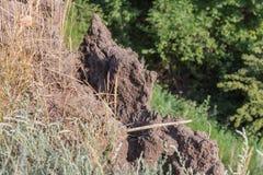 Καταστροφή καθιζήσεων εδάφους βουνών στη sesmically επικίνδυνη περιοχή Μεγάλες ρωγμές στη γη, κάθοδος των μεγάλων στρωμάτων του γ στοκ φωτογραφία