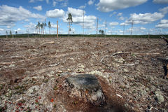 καταστροφή που καταρρίπτει το δασικό φυσικό nort Στοκ εικόνα με δικαίωμα ελεύθερης χρήσης