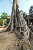 Καταστροφή Angkor Wat Καμπότζη Στοκ εικόνα με δικαίωμα ελεύθερης χρήσης