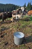 καταφύγιο αγελάδων Στοκ εικόνες με δικαίωμα ελεύθερης χρήσης