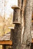 Καταφύγιο για τα πουλιά στο birdhouse που κρεμά σε ένα δέντρο στο πάρκο φθινοπώρου Στοκ Φωτογραφίες