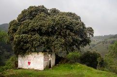 Καταφύγιο κάτω από το δέντρο στοκ φωτογραφία