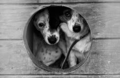 Καταφύγιο σκυλιών Στοκ εικόνες με δικαίωμα ελεύθερης χρήσης