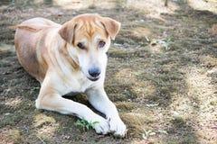 Καταψύχοντας σκυλί Στοκ φωτογραφία με δικαίωμα ελεύθερης χρήσης
