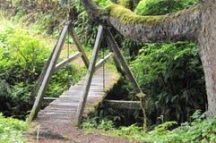 Καταδίκη Creek Trail Del Norte στοκ εικόνες