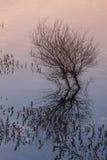 Καταδυμένο δέντρο στο ηλιοβασίλεμα Στοκ εικόνα με δικαίωμα ελεύθερης χρήσης