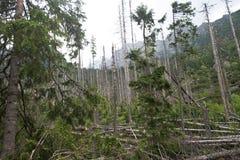 Κατεβασμένα δέντρα σε υψηλό Tatras Στοκ Φωτογραφίες