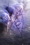 κατεψυγμένο λουλούδι Στοκ φωτογραφίες με δικαίωμα ελεύθερης χρήσης