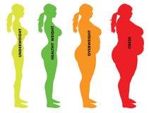 Κατηγορίες μαζικών δεικτών BMI σώματος γυναικών Στοκ Εικόνες