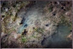 Κατοίκιση και Burrowed καβουριών στη λάσπη κατά τη διάρκεια μιας χαμηλής παλίρροιας Στοκ φωτογραφίες με δικαίωμα ελεύθερης χρήσης