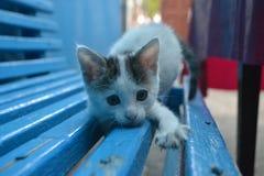 Κατοικίδια ζώα γατών ζώων θερινών γατακιών γατών Στοκ Εικόνα