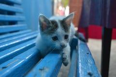 Κατοικίδια ζώα γατών ζώων θερινών γατακιών γατών Στοκ Εικόνες