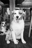 Κατοικίδια ζώα και κατοικίδια ζώα Στοκ Φωτογραφίες