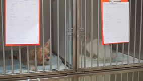 Κατοικίδια ζώα στο κλουβί μετάλλων απόθεμα βίντεο