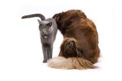 κατοικίδια ζώα Στοκ Φωτογραφία