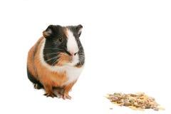 κατοικίδια ζώα Στοκ Εικόνα