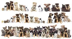 κατοικίδια ζώα που τίθεν&ta Στοκ Εικόνες