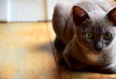 κατοικίδιο ζώο γατών animail Στοκ εικόνες με δικαίωμα ελεύθερης χρήσης