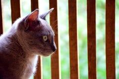 κατοικίδιο ζώο γατών animail Στοκ Εικόνες